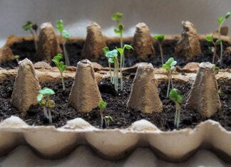 Praktyczne porady dotyczące sadzonek – o czym pamiętać